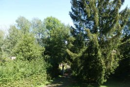 Real Estate in 4864  Attersee: Attersee: Property with old stock between yacht club and golf course! - Picture