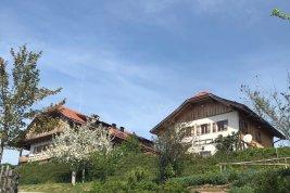 Immobilie in 5360 Mattsee : Ein Natur-Paradies für Pferd und Reiter: Ensemble mit Villa, Personalhaus, Reithalle und Koppeln